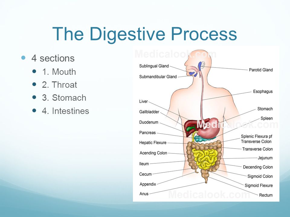 Digestive System 3 Main Functions Adigestion Breakdown Of Foods