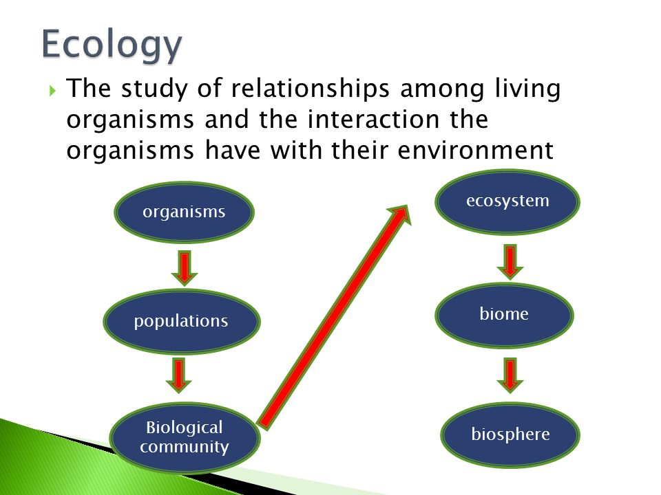 a study of the ecosystem Ecosystem functions  home study guides two separate types of cycles keep elements moving through ecosystems: gaseous cycles in which the atmosphere is the reservoir and sedimentary cycles in which the rocks of the earth's crust are the reservoir.