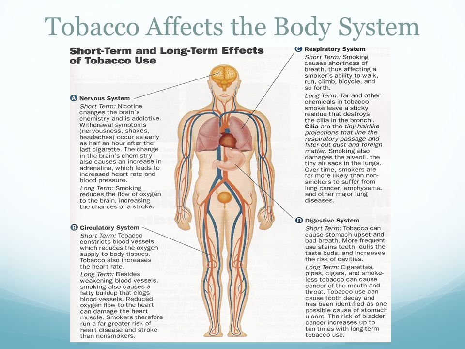 how does tobacco use affect the human body essay View of the organs in the human body and an explanation of how tobacco use affects each organ the 2004 surgeon general's report, the health consequences of smoking on the human body, provides the scientific background for this lesson.