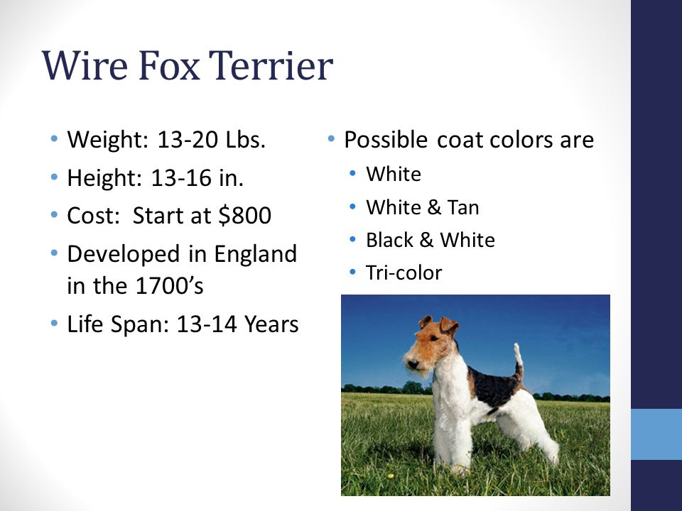 TERRIER GROUP. Miniature Schnauzer Weight: Lbs. Height: in. Cost ...