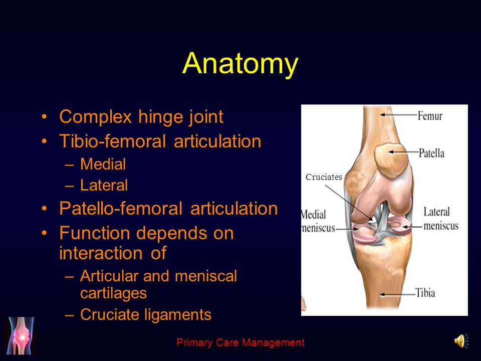 The Knee Andrew Pearse Consultant Trauma and Orthopaedics