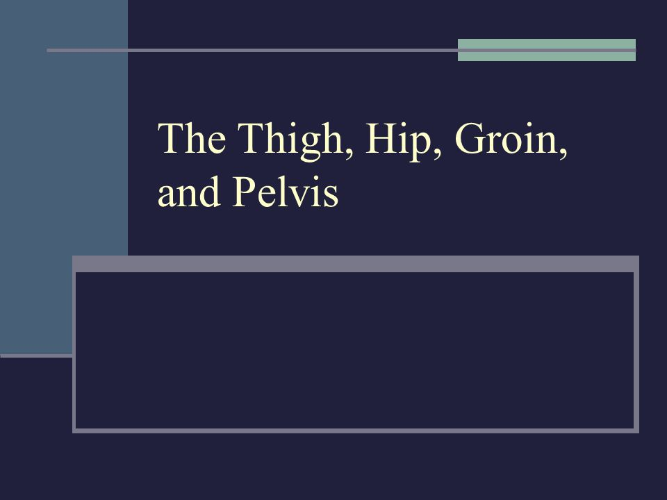 The Thigh, Hip, Groin, and Pelvis. Anatomy of the Thigh Review ...