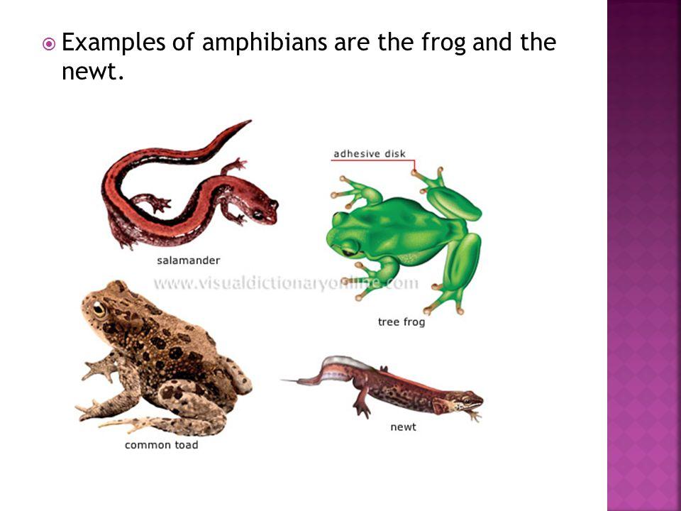 Reptilia reptiles animalia.