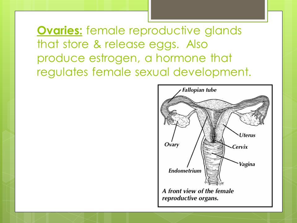 Male & Female Reproductive Diagrams. Female Reproductive System ...
