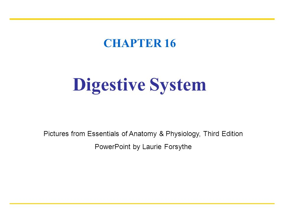 CHAPTER 16 Digestive System Pictures from Essentials of Anatomy ...