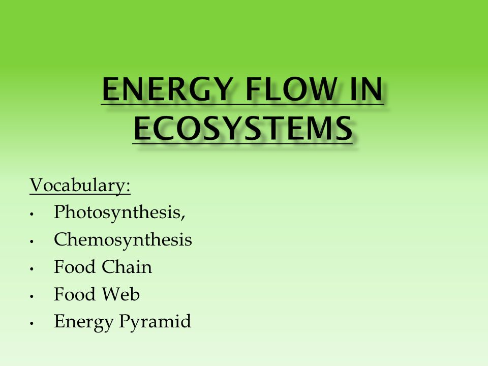 Vocabulary Photosynthesis Chemosynthesis Food Chain Food Web