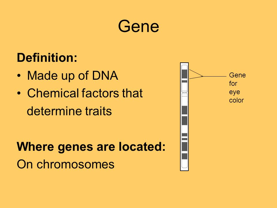 Genetic terminology what makes these two individuals so similar 11 gene definition made up of dna chemical factors that determine traits where genes are located on chromosomes gene for eye color malvernweather Choice Image