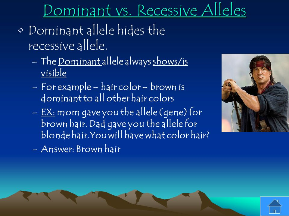 dominant and recessive alleles experiment The heterozygous state is resolved by considering the relationship between alleles dominant and recessive genes  so this experiment has  properties of alleles.