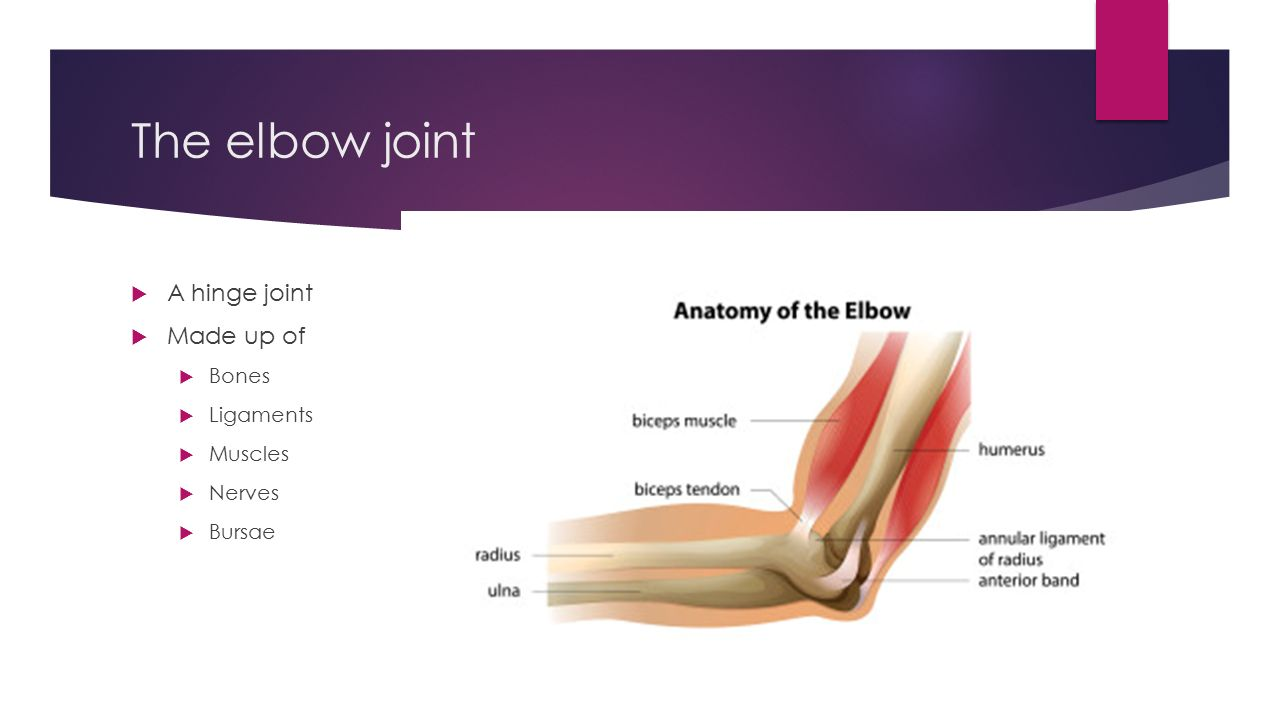 Elbow Anatomy. The elbow joint  A hinge joint  Made up of ...