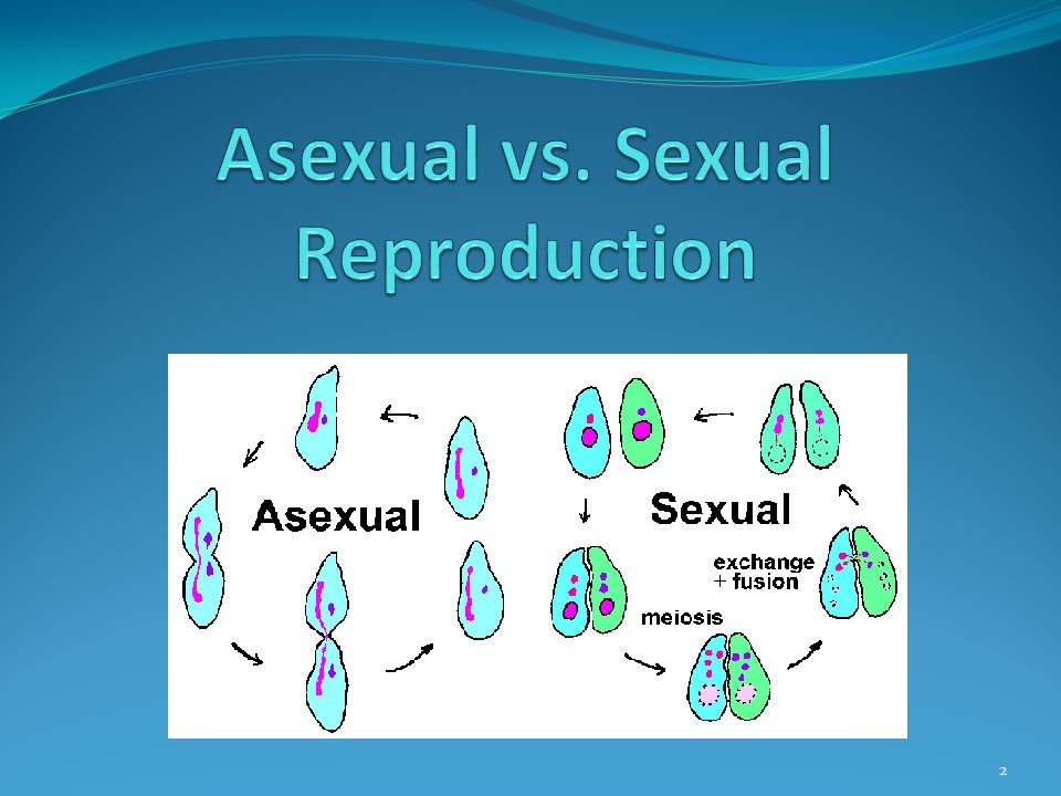 Difference between asexual and sexual reproduction biology lab