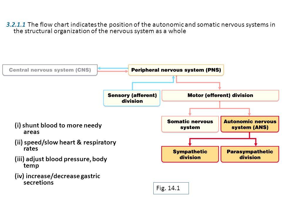 Nervous System Division Chart The Autonomic Nervous System Ccf L11