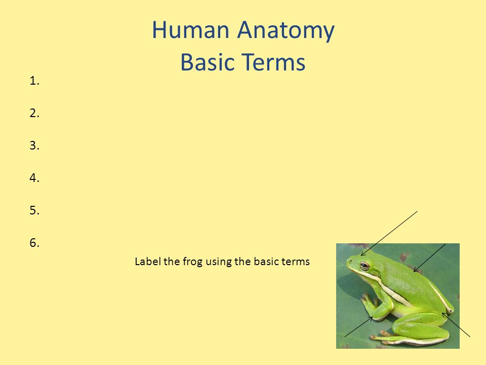 Human Anatomy Basic Terms Label the frog using the basic terms ...