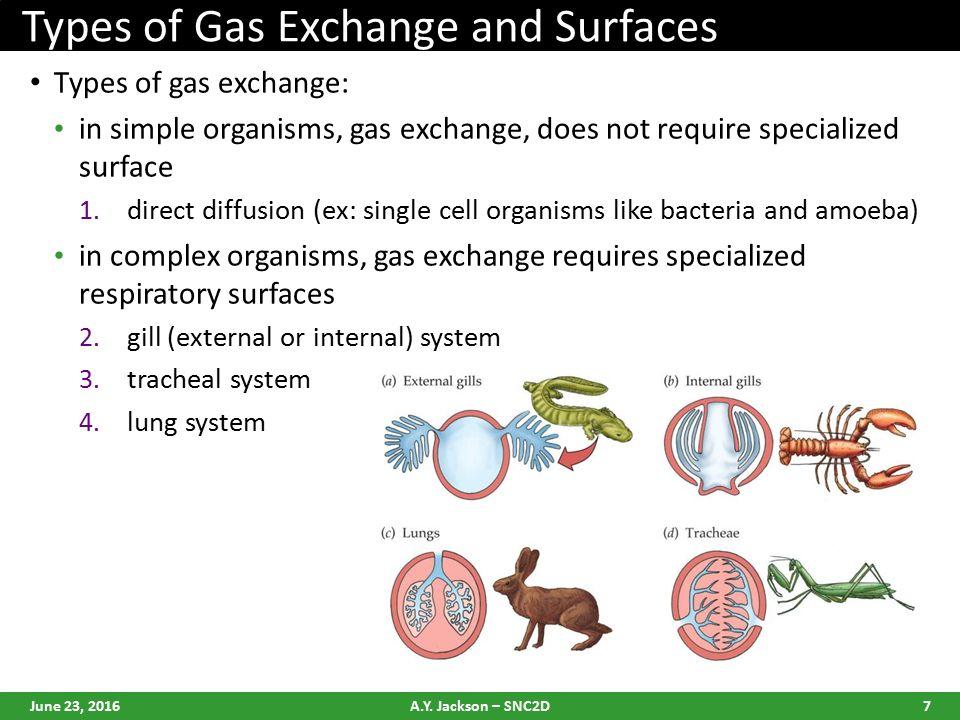 Gas exchange in organisms