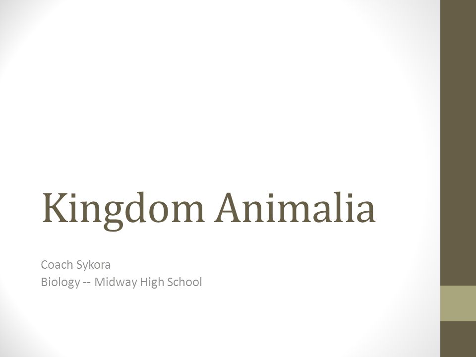 Image of: Definition Kingdom Animalia Coach Sykora Biology Midway High School Slideplayer Kingdom Animalia Coach Sykora Biology Midway High School Ppt