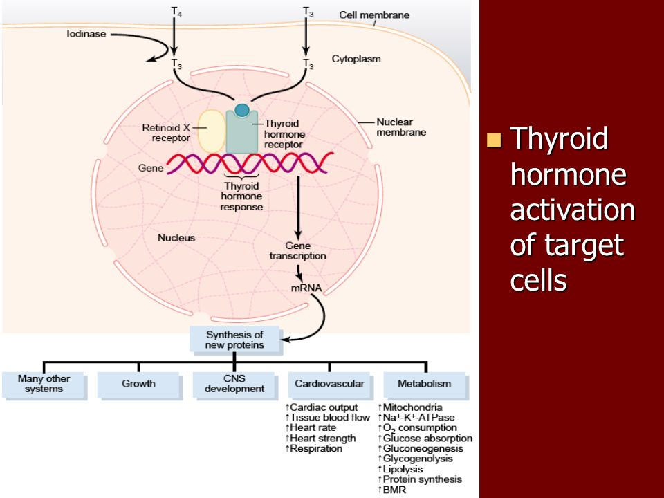 Role Of Endocrine Glands In Regulation Of Body Functions Ppt Download