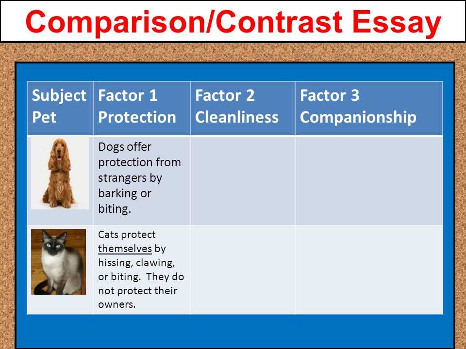 compare and contrast essay about dogs