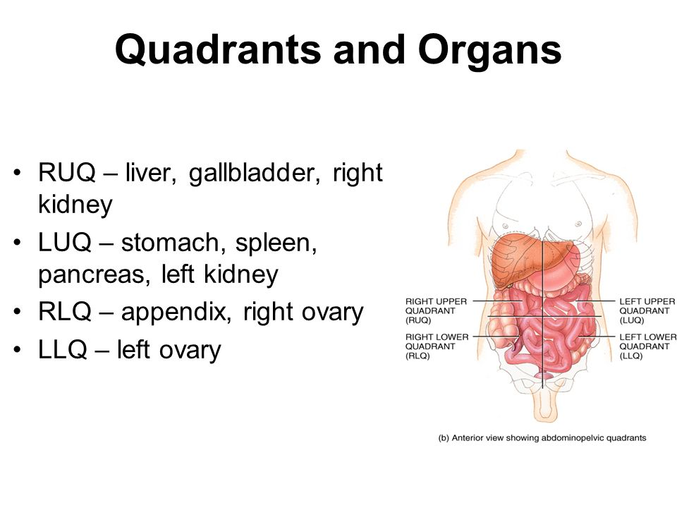 Chapter 1 Lecture Two The Language Of Anatomy And Homeostasis Ppt