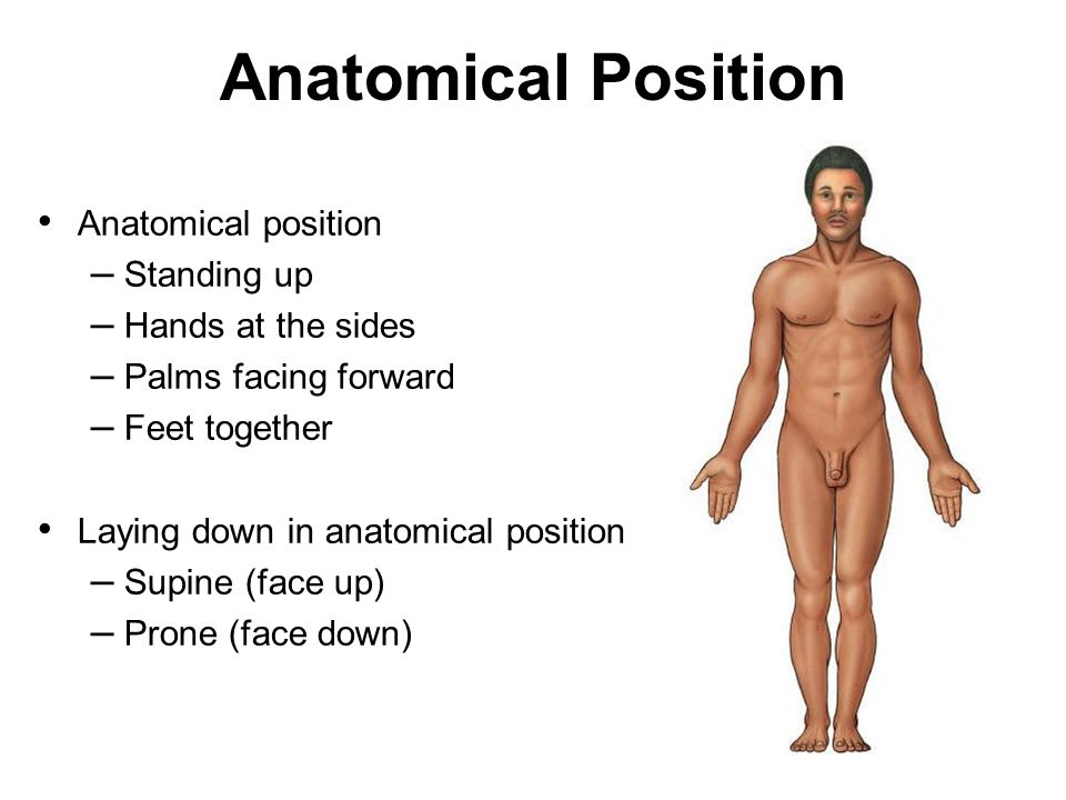 Chapter 1 Lecture Two The Language of Anatomy and Homeostasis. - ppt ...