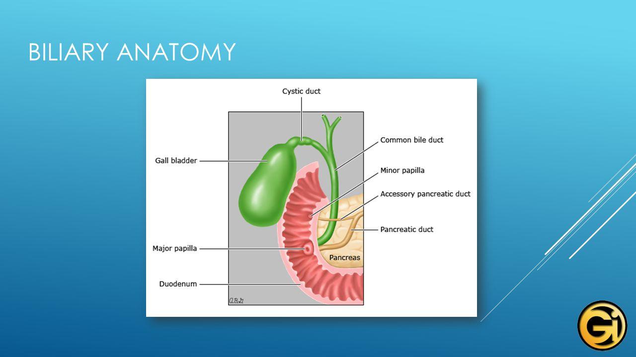 Unr Echo Project Clark A Harrison Md Gastroenterology Consultants
