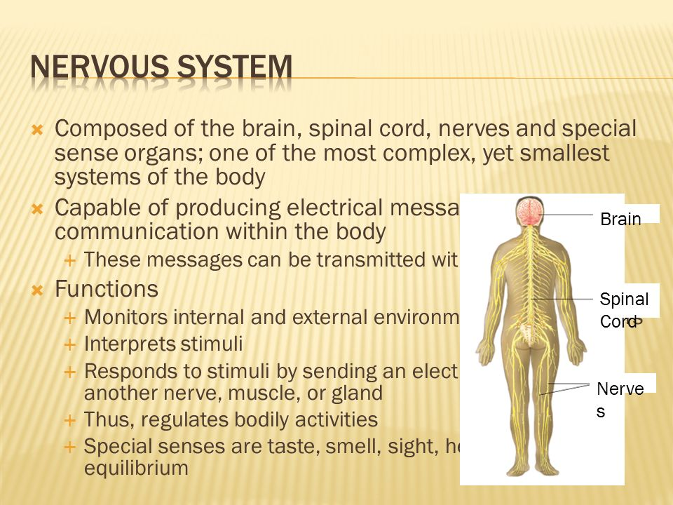 Identify 11 Body Systems Name Basic Parts Of Body Systems Name