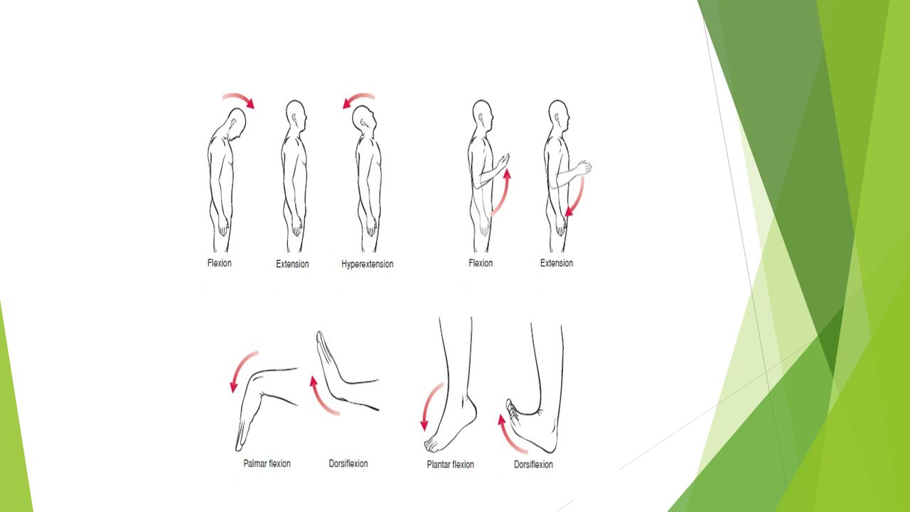 Introduction to Kinesiology By: Dr. M. Abbas Jamil. - ppt download
