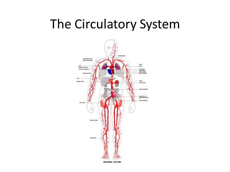 The Circulatory System. Circulatory System The Circulatory System ...