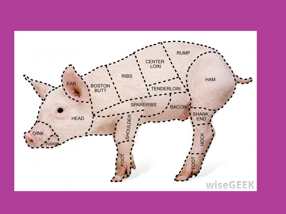 Understand agriculture animals. Essential Standard ppt download
