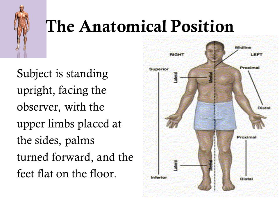 Chapter 1 The Anatomical Position Medical Terminology Ppt Download