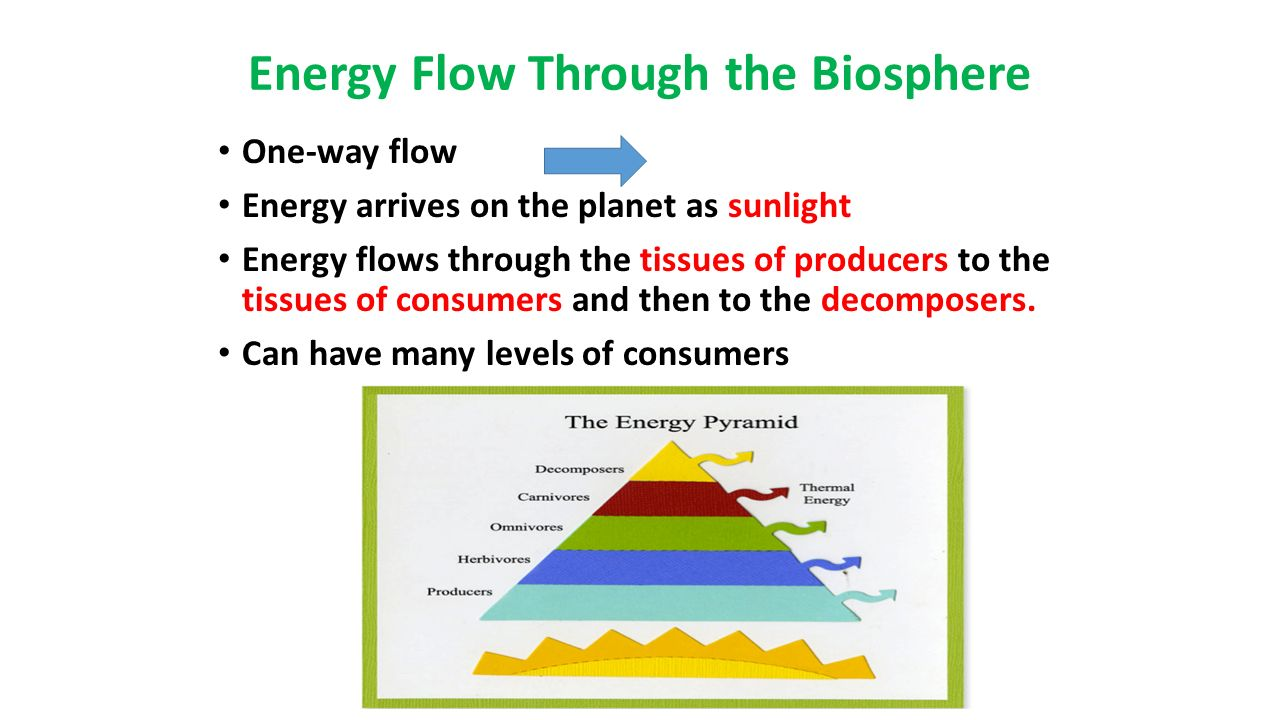 What is the biosphere 97