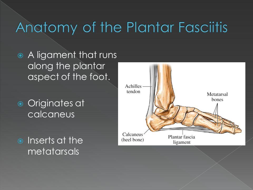 The anatomy of the Plantar Fascia  What is Plantar Fasciitis ...