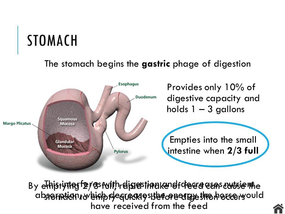 Digestive Anatomy & Physiology EQS 110 LECTURE MENU Understanding ...