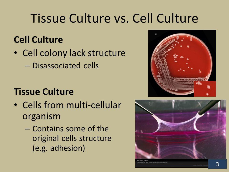 Tissue Culture Biotechniques (BIOL 410)  Tissue Culture The