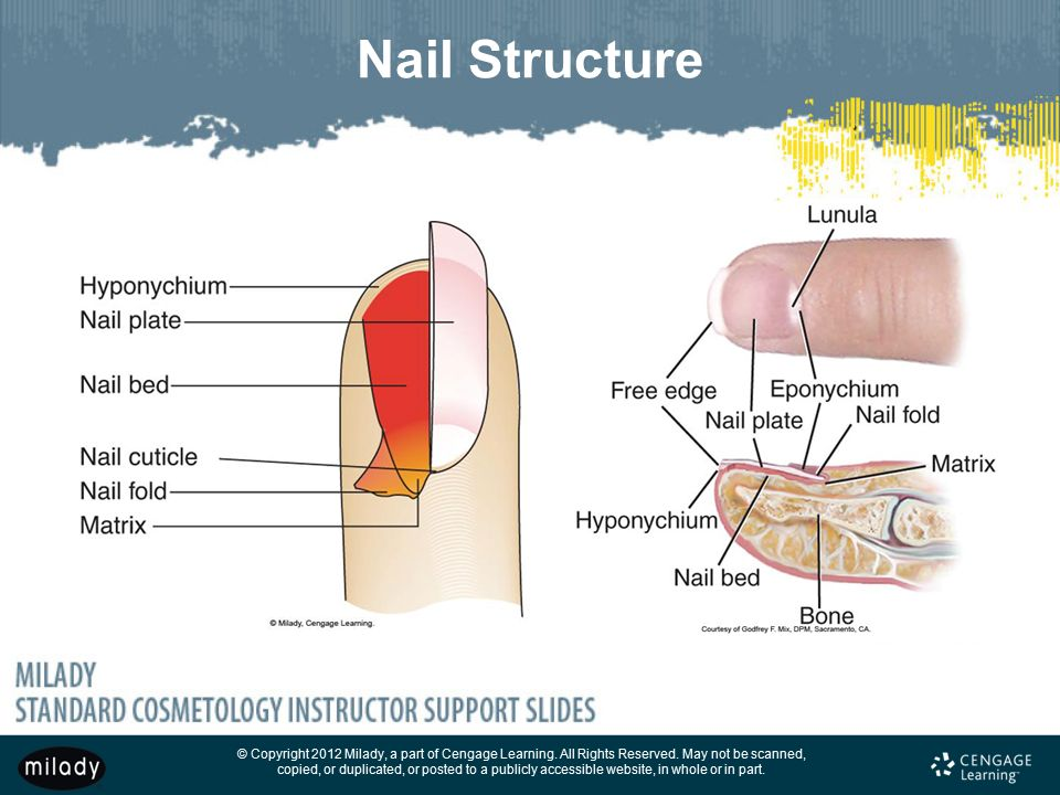 Milady Nail Diagram Block And Schematic Diagrams
