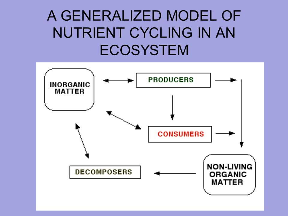 how do nutrients cycle through an ecosystem