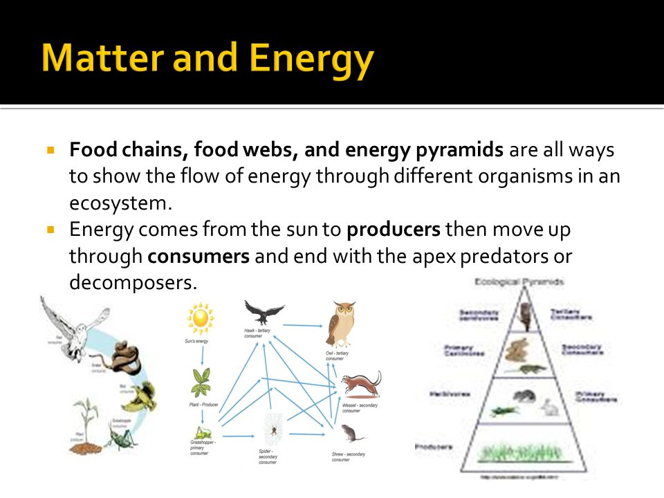 Food Chains Food Webs And Energy Pyramids Are All Ways To Show The