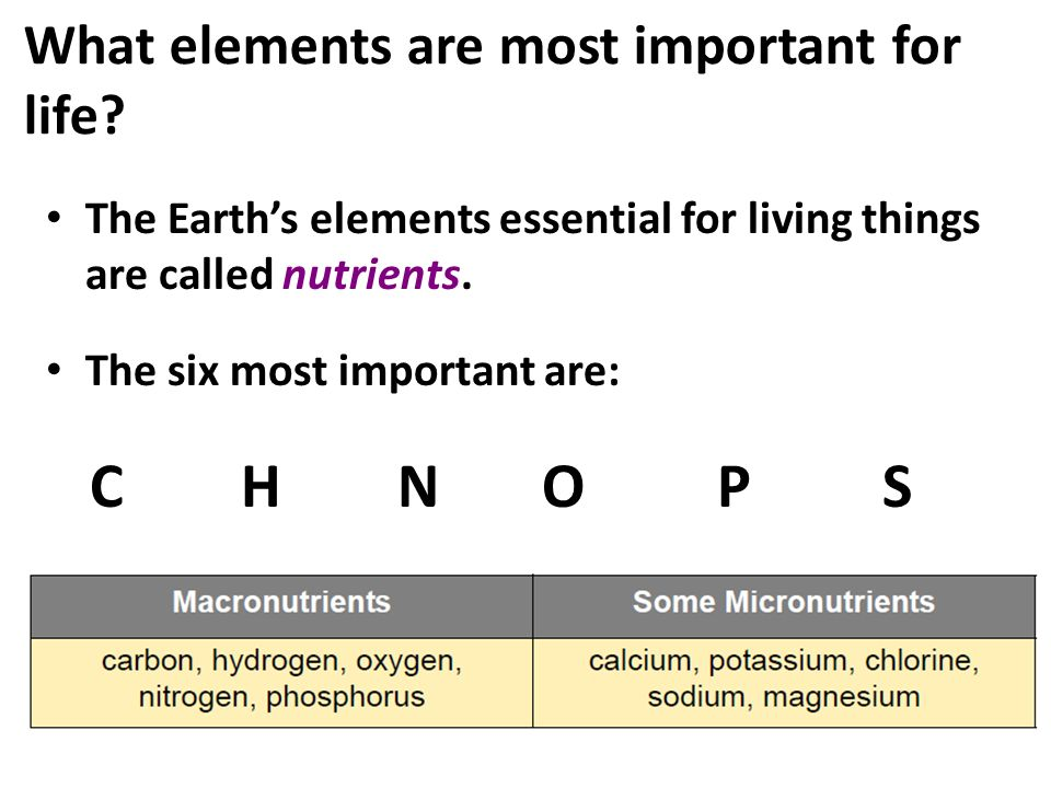 What Elements Are Most Important For Life