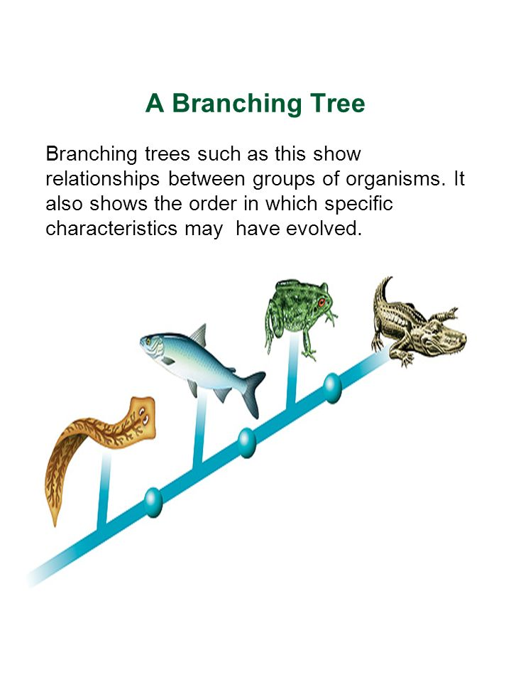 Table Of Contents 75 Branching Trees 74 Classifying Organisms 73
