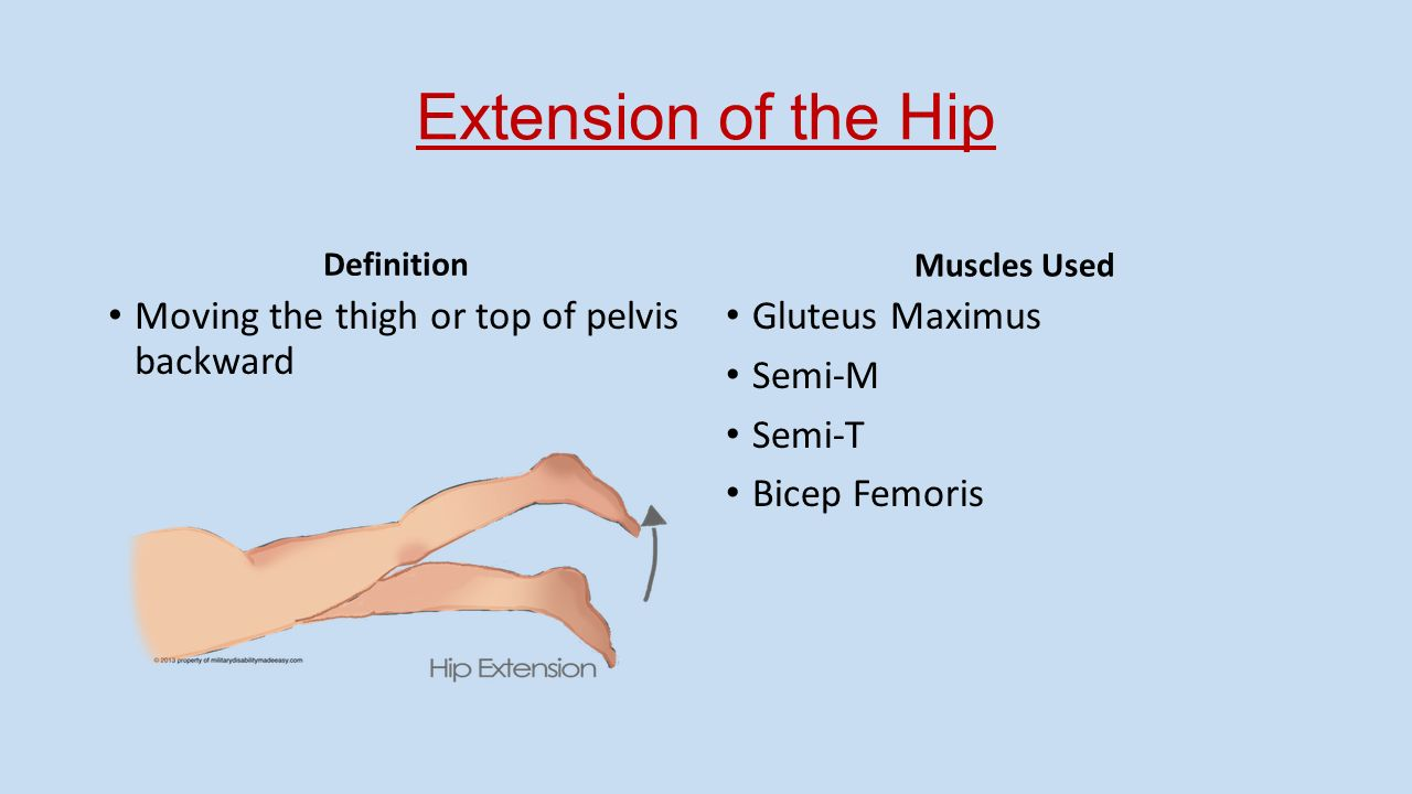 Articulations of the Hip, Knee, and Ankle - ppt download