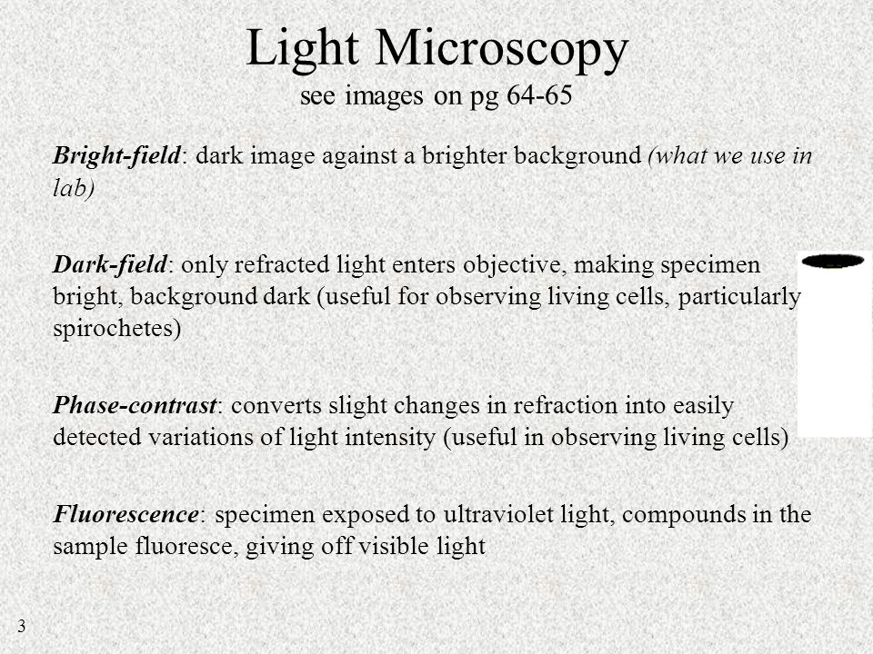 dark and bright field microscopy