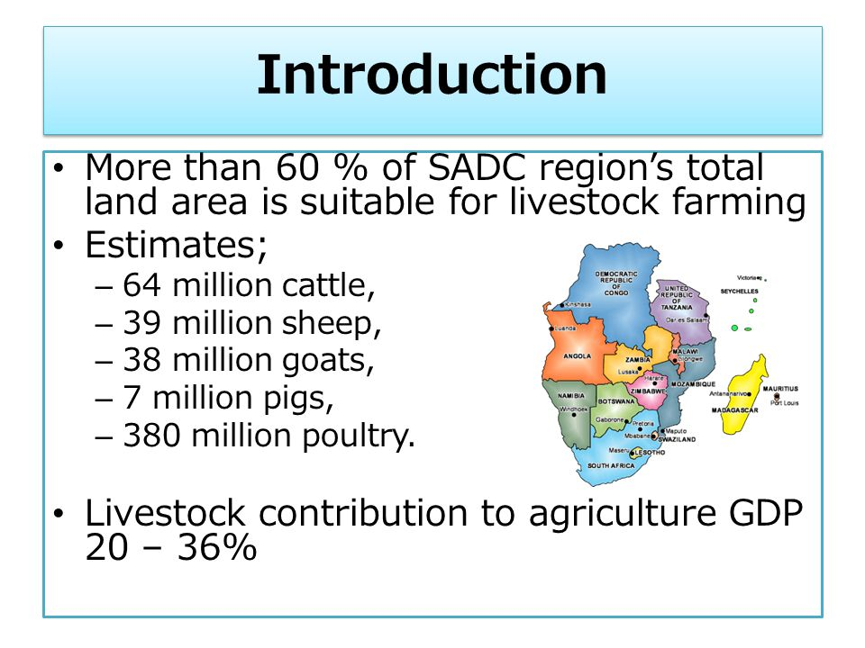 Livestock and poultry business opportunities for youth in