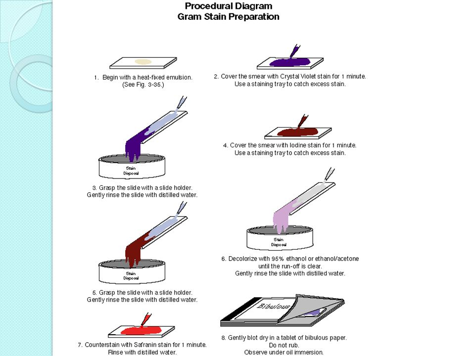 which is the most important step in the gram stain