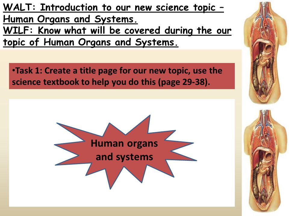 Walt Introduction To Our New Science Topic Human Organs And