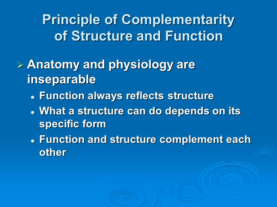 Lecture 1 The Human Body: An Orientation: Part A. - ppt download