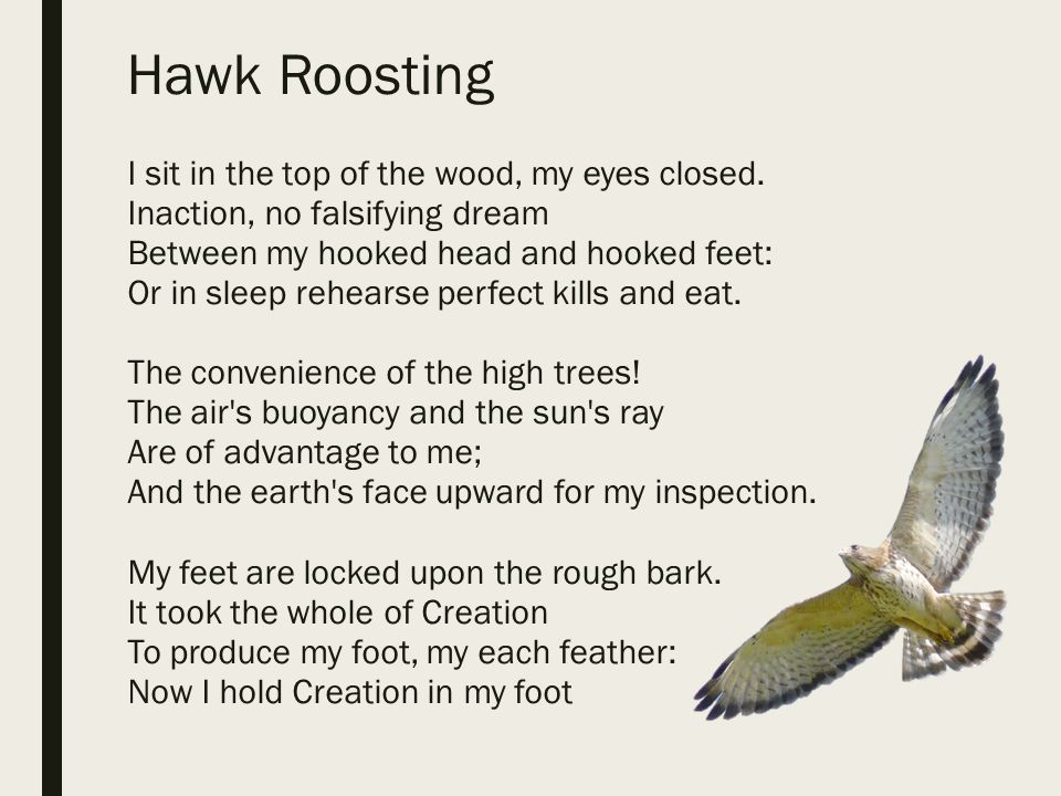 hawk roosting critical analysis
