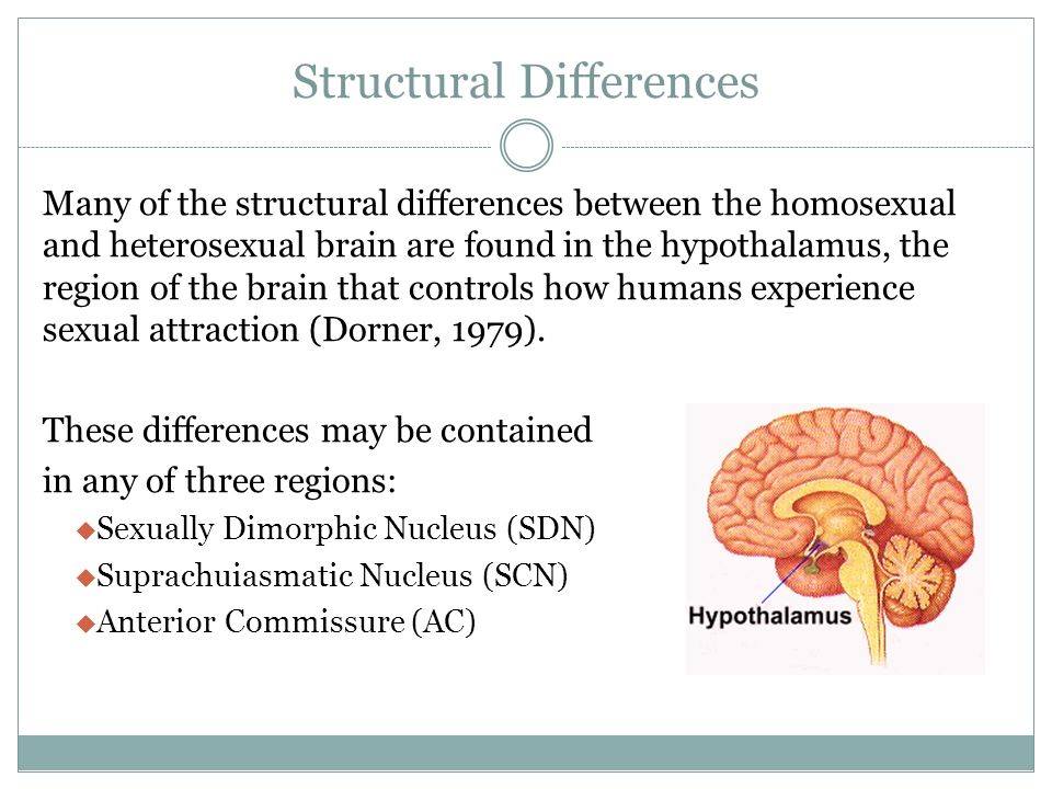 Sexually dimorphic regions of the brain