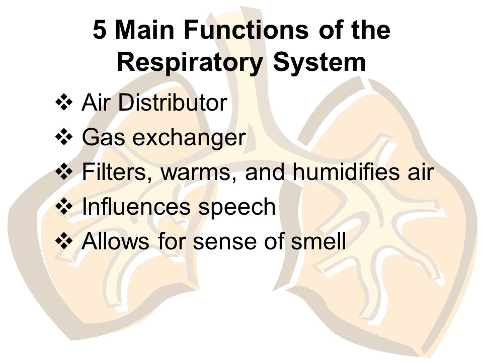 The Anatomy and Physiology of the Respiratory System. - ppt download