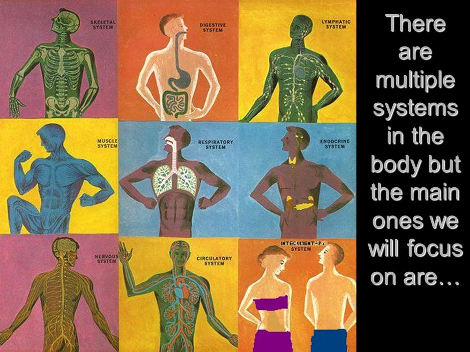 Part 1 Part 1 The Body The Body There Are Multiple Systems In The
