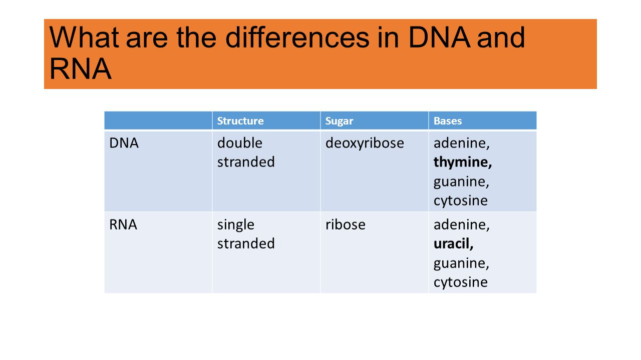 Functions of DNA and its structure