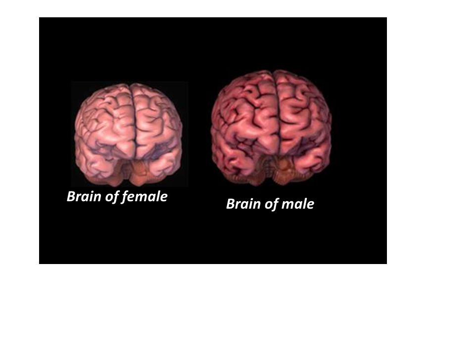 Image result for male female brain