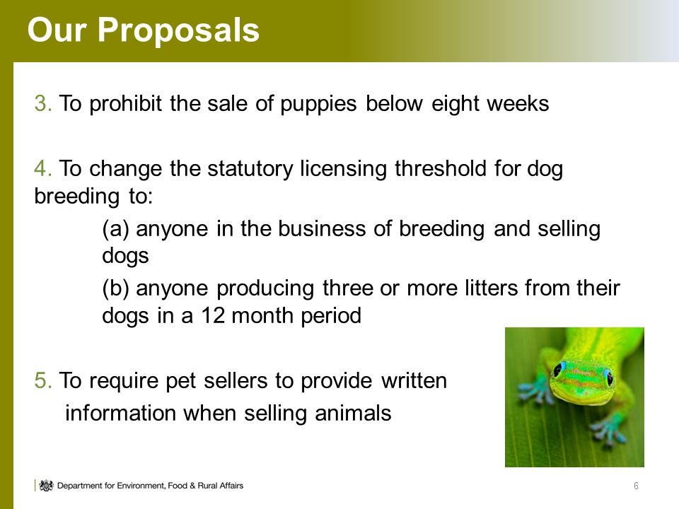 Animal Establishment Licensing Overview and Proposals for